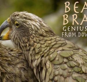 世界で最も頭のいい鳥