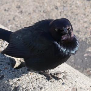 鳥好きが泣いて喜びそうな写真集