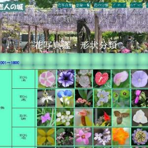 花の形状分類の完成 (No 2278)