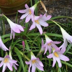庭 の 花 (No 2280)