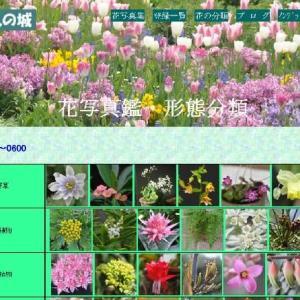 花の形態分類の改定 (No 2281)