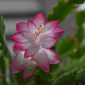 庭 の 花 (No 2294)
