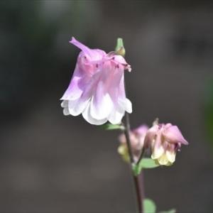 庭 の 花 (No 2376)
