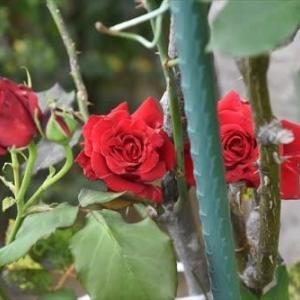 庭 の 花 (No 2380)
