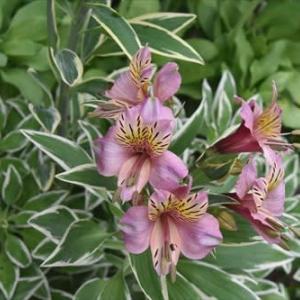 庭 の 花 (No 2382)