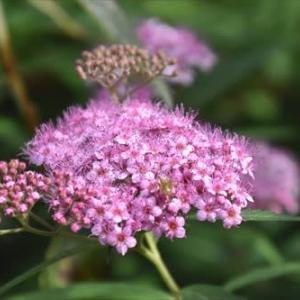 庭 の 花 (No 2385)
