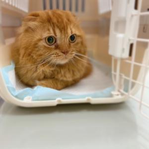 獅子丸の病院の様子