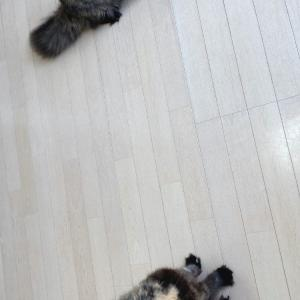 サビ猫コンビ