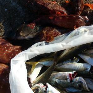 加唐島夜釣り・釣果報告