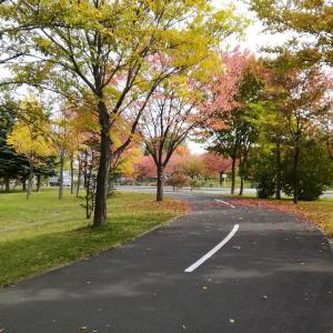 紅葉する散歩道