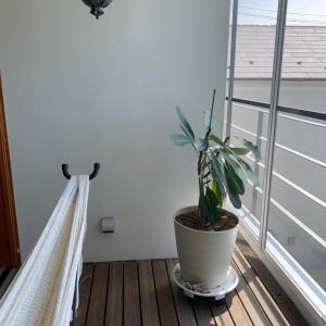 植木の水やりでウッドデッキを傷めない方法