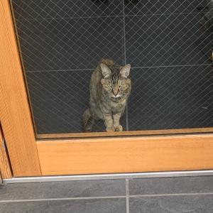 植木屋さんが来て、猫が可愛かった話し
