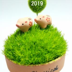 2019年 本年もよろしくお願いいたします。