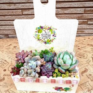 おすすめ!100均雑貨で作る簡単かわいい木箱に多肉の寄せ植えをイン!