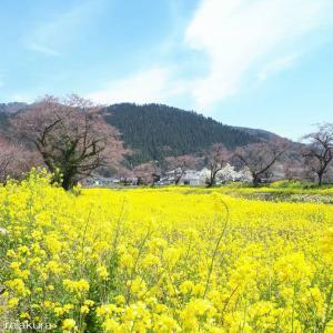 きれいな春の風景見つけました!