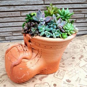 ブーツ鉢に多肉寄せ植え(*゚▽゚*)