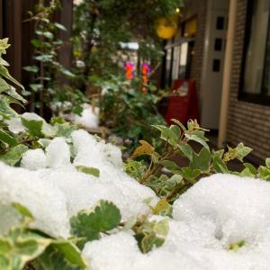 雪が降った日&街中パトロール&新メニュー