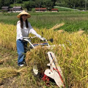 日本で最も美しい村にて稲刈り・天日干し・森林セラピー
