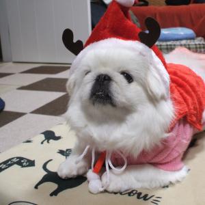 Merry Xmas(^o^)/