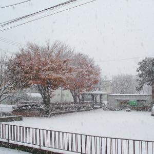 初雪降りました(^o^)/