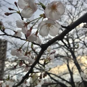 2019税理士試験合格発表 ~受験された方へメッセージ~