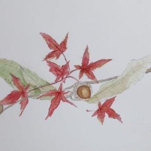 秋のいろいろ、絵に描く