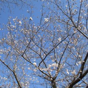 春の花を探して
