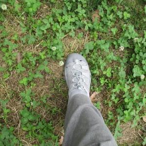 緑陰を歩く