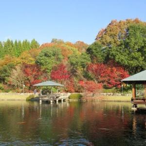 三景園、名残の紅葉