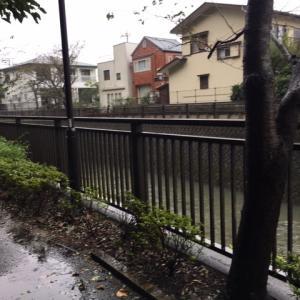 土砂降り朝散歩