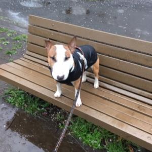 雨散歩でスタート