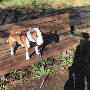 折れ曲がった耳と犬散歩情報網