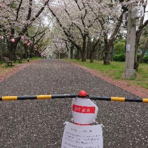 健康増進桜パトロールと最後のJOGNOTEエントリー