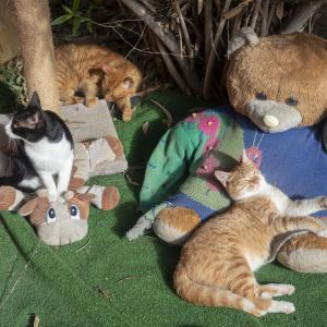 マルタ 猫の村とヒューゴズバーガー