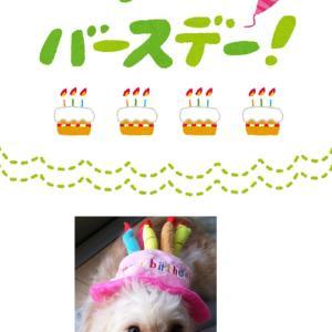 コン太くん 1歳のお誕生日!