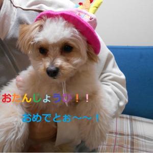 ヨメちゃん 1歳のお誕生日!