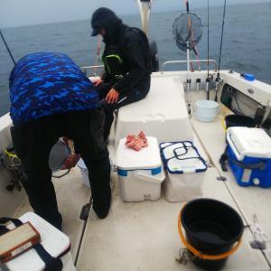 今日のカワハギ釣り