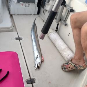 ジギング    魚種が違う