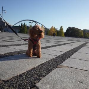 ポム、初めての駒沢公園