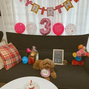 ポム、3歳の誕生日