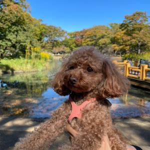 ポム、引き続き代々木公園をお散歩