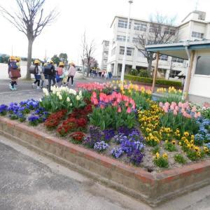 花壇とギフチョウ