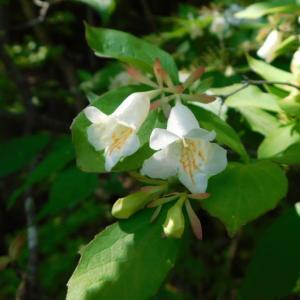 海上の森 木の花