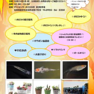 イベント紹介&今日のメダカ