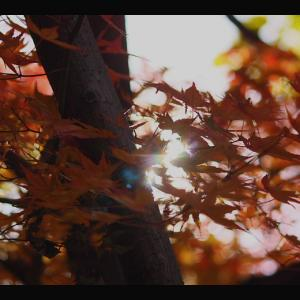 東京必去秘密仙境!賞紅葉・櫻花好地方,車站徒步這分鐘即達-「等等力溪谷」!