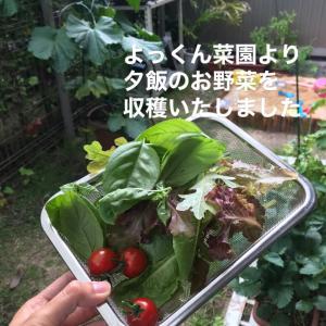 家庭菜園で採れたて野菜〜コロナの恩恵〜
