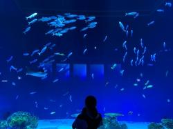 新しい水族館行ってきました