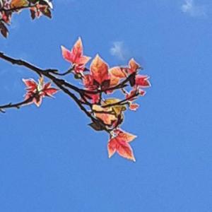 秋が近づいてます 紅葉