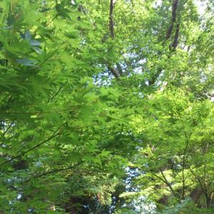 おうちで森林浴♪アロマで基礎体温と免疫力アップです
