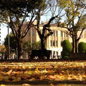 秋が終わりつつある市内の風景...